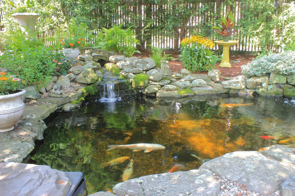 Backyard koi ponds and water gardens are a growing trend for Landscaping around koi pond