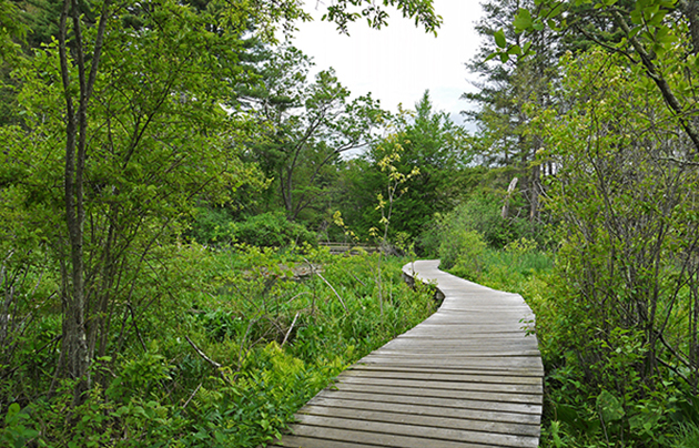 Green forest park | Amazing Hiking Trails You Have To See To Believe