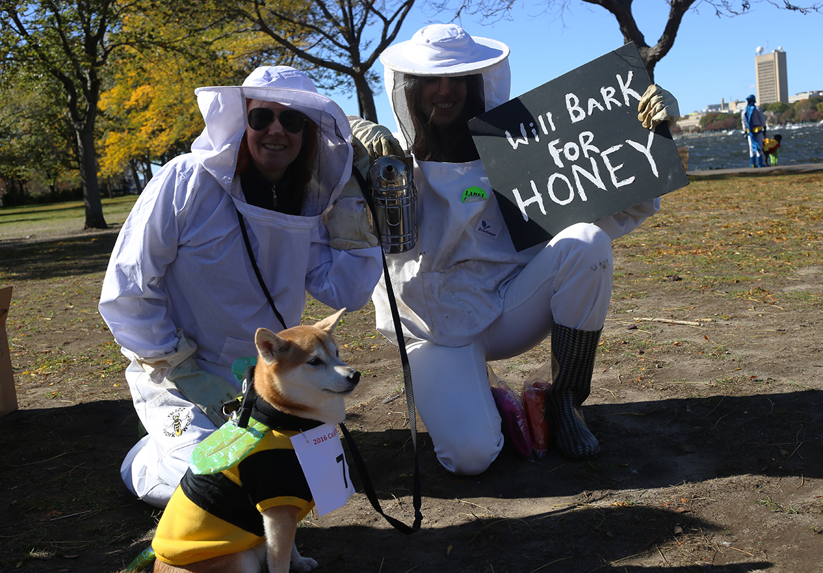 A Shiba Inu dressed as a bee with owners dressed as beekeepers