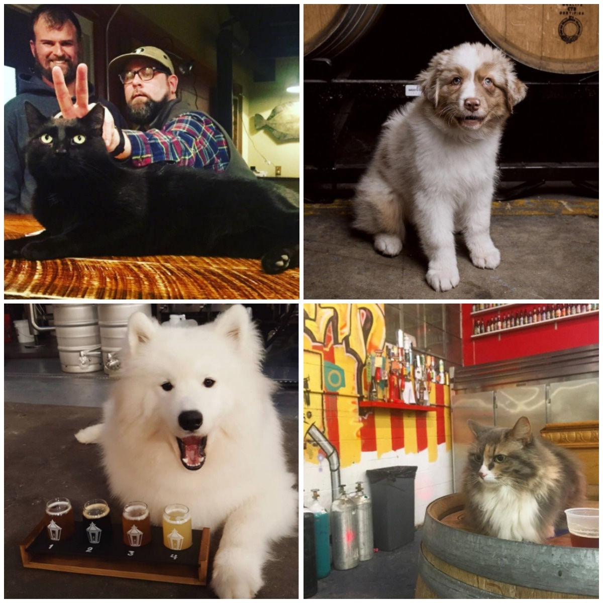 New England breweries to follow on Instagram for dogs cats