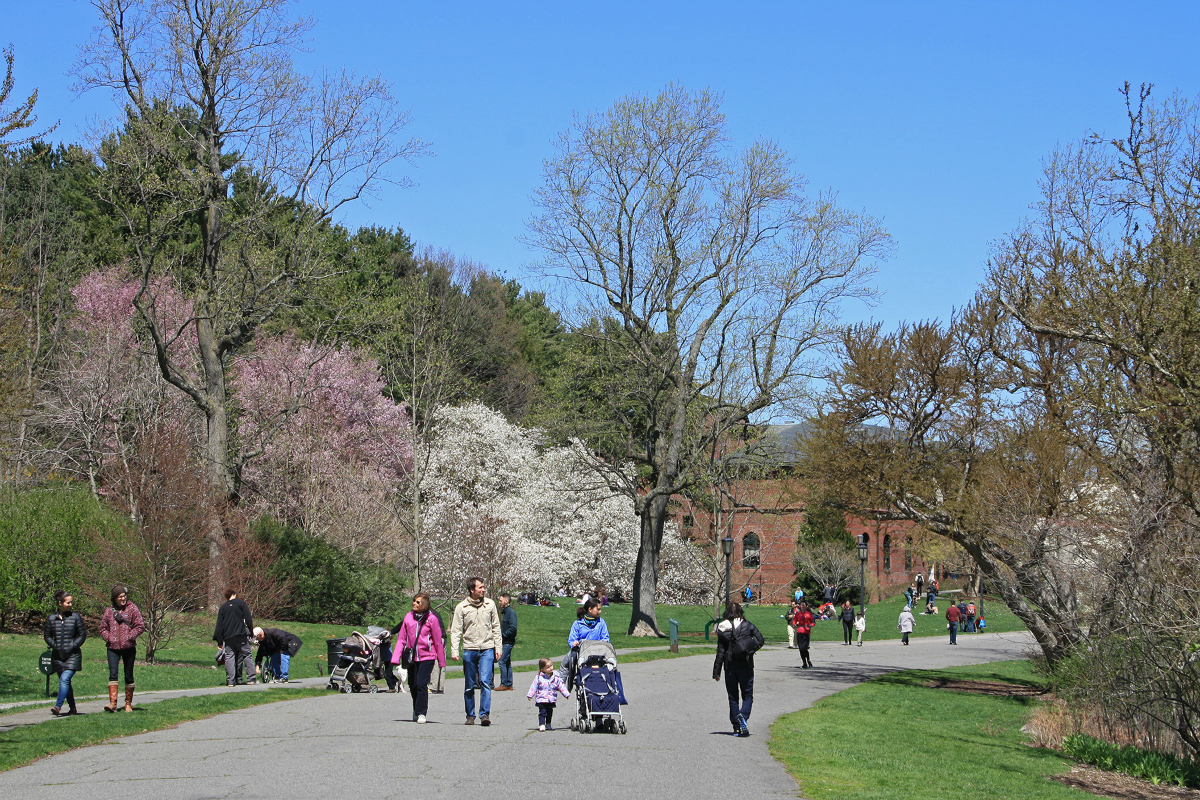 Photo provided by The Arnold Arboretum of Harvard University