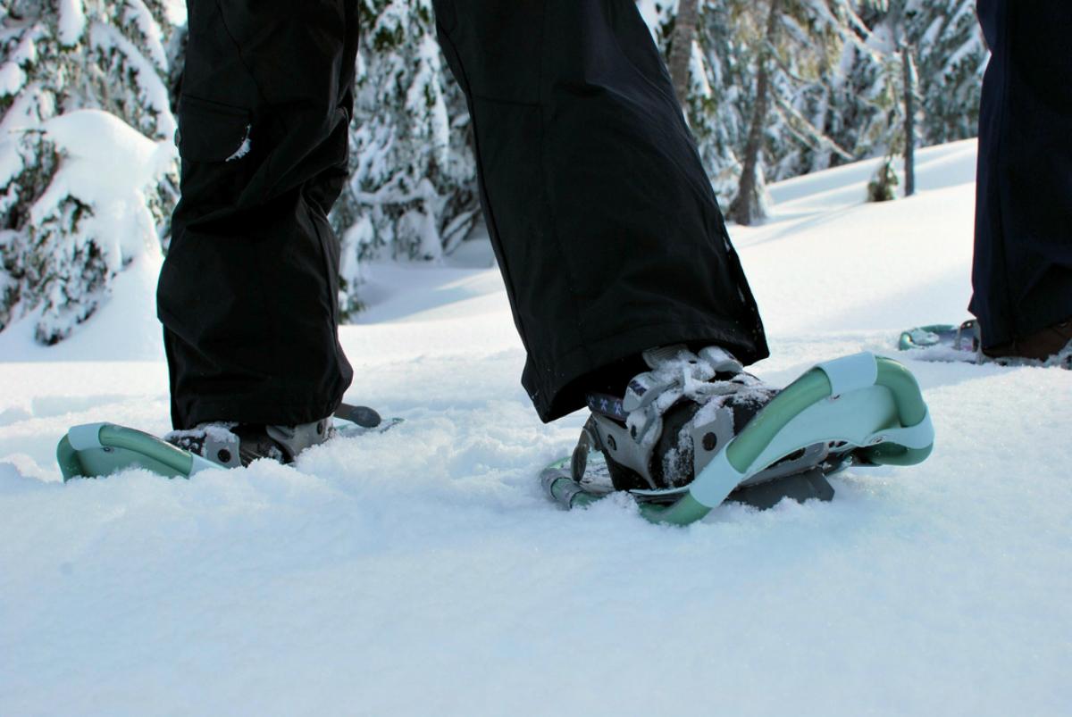snowshoelead
