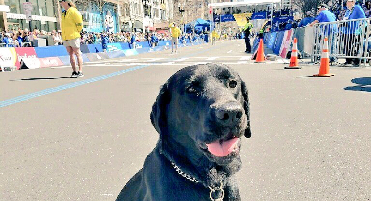 Ten Very Good Dogs Spotted at the 2017 Boston Marathon