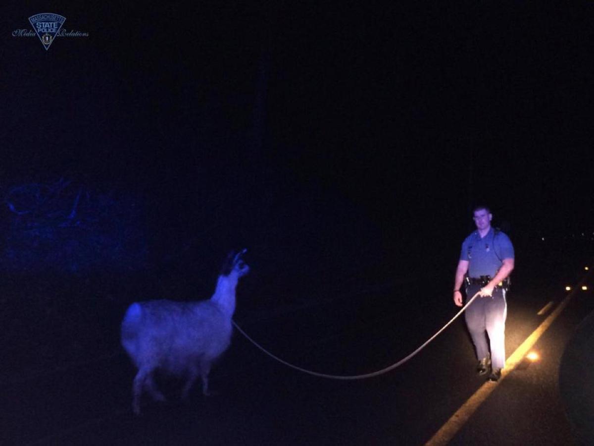 Photo via Mass. State Police