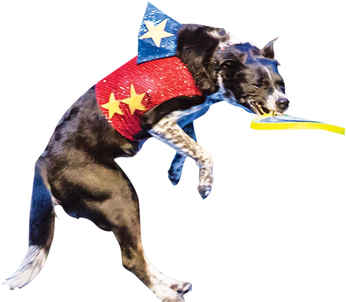 stunt dogs