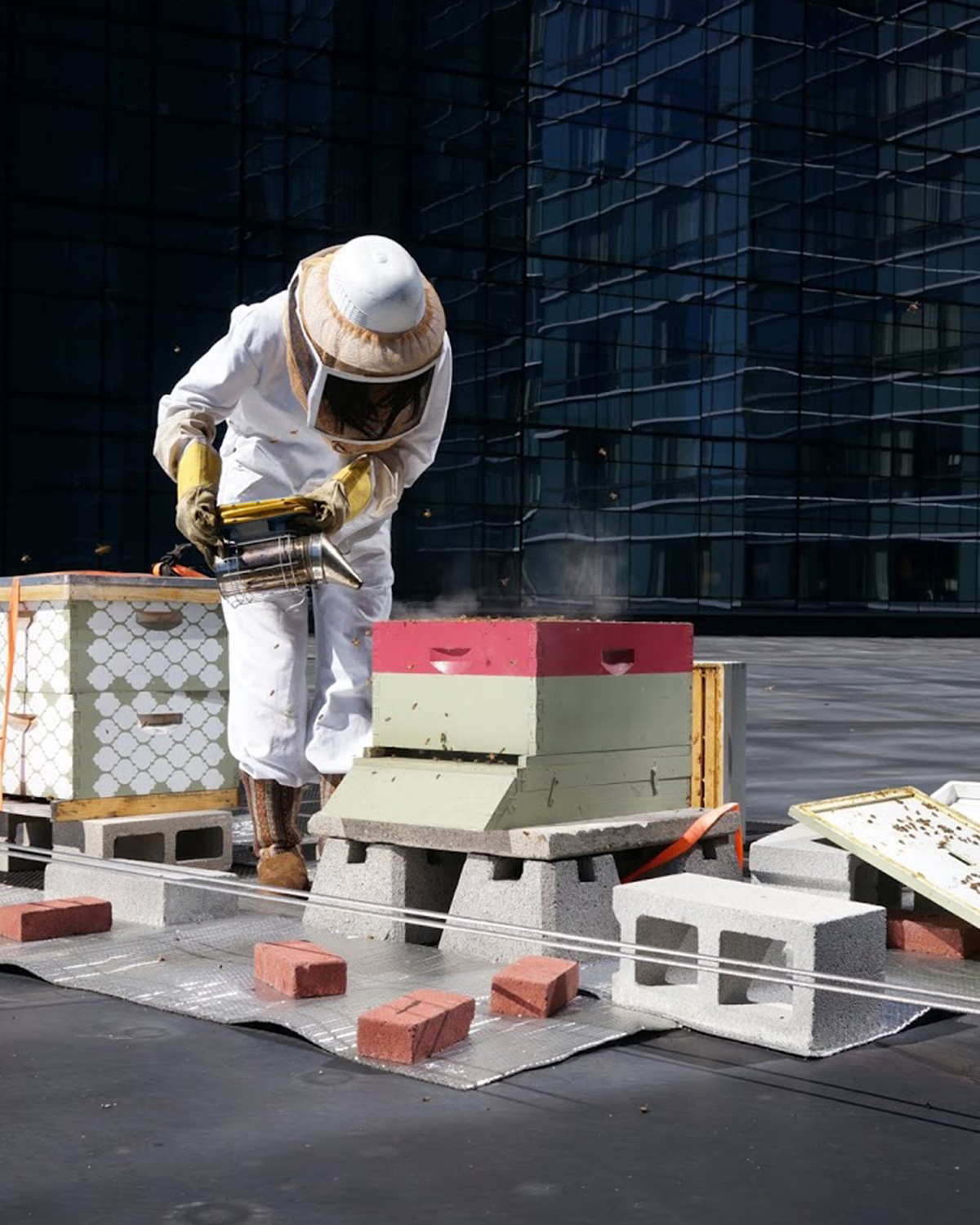 urban beekeeping intercontinental hotel boston rooftop