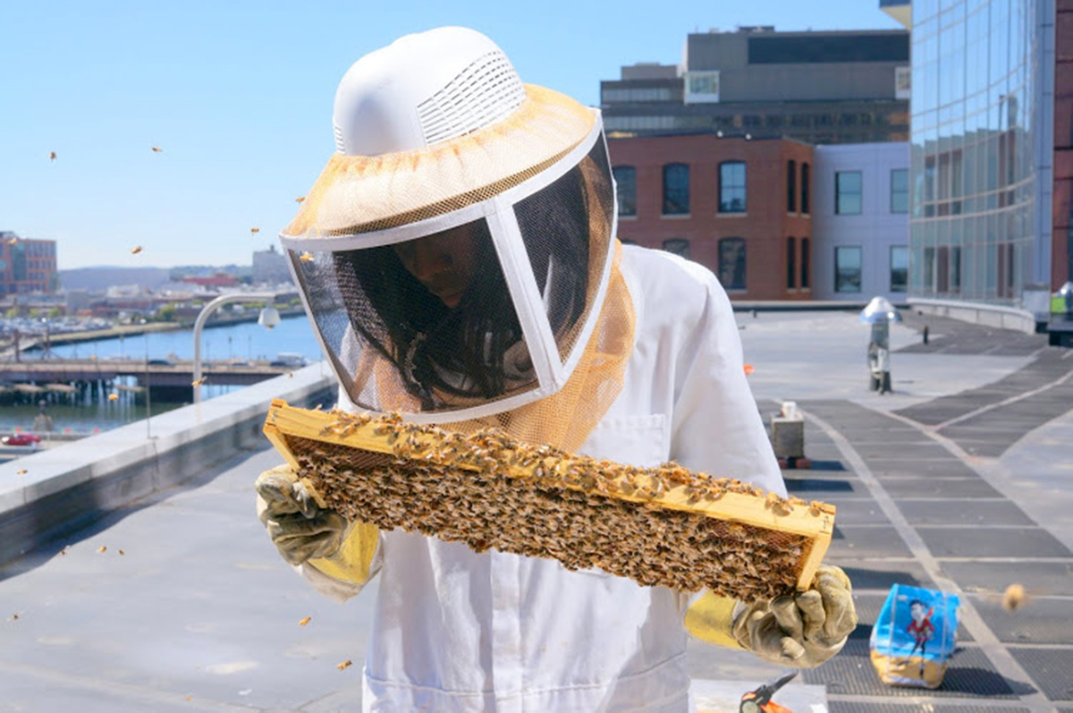 urban beekeeping intercontinental hotel boston