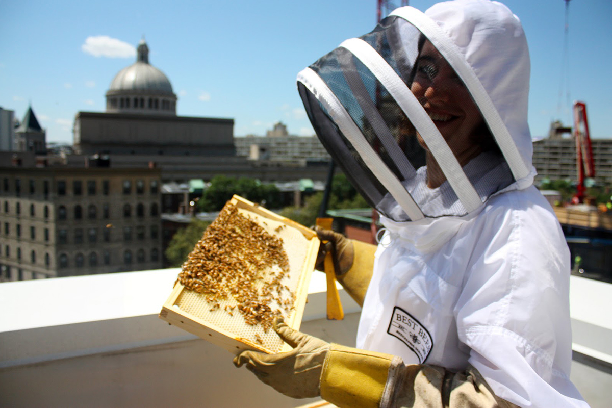 urban beekeeping taj hotel boston best bees jess lindsey