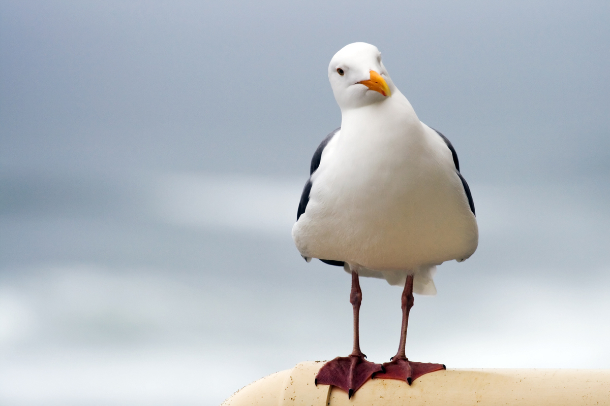 Image result for seagulls at the beach
