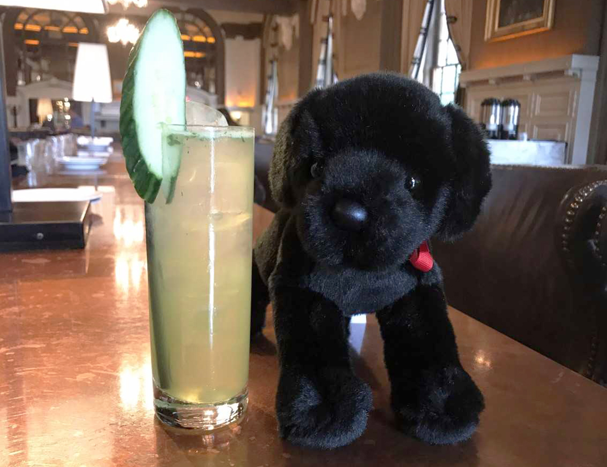 Catie's Cooler—and a fluffy, stuffed Catie Copley lookalike—at Oak Long Bar
