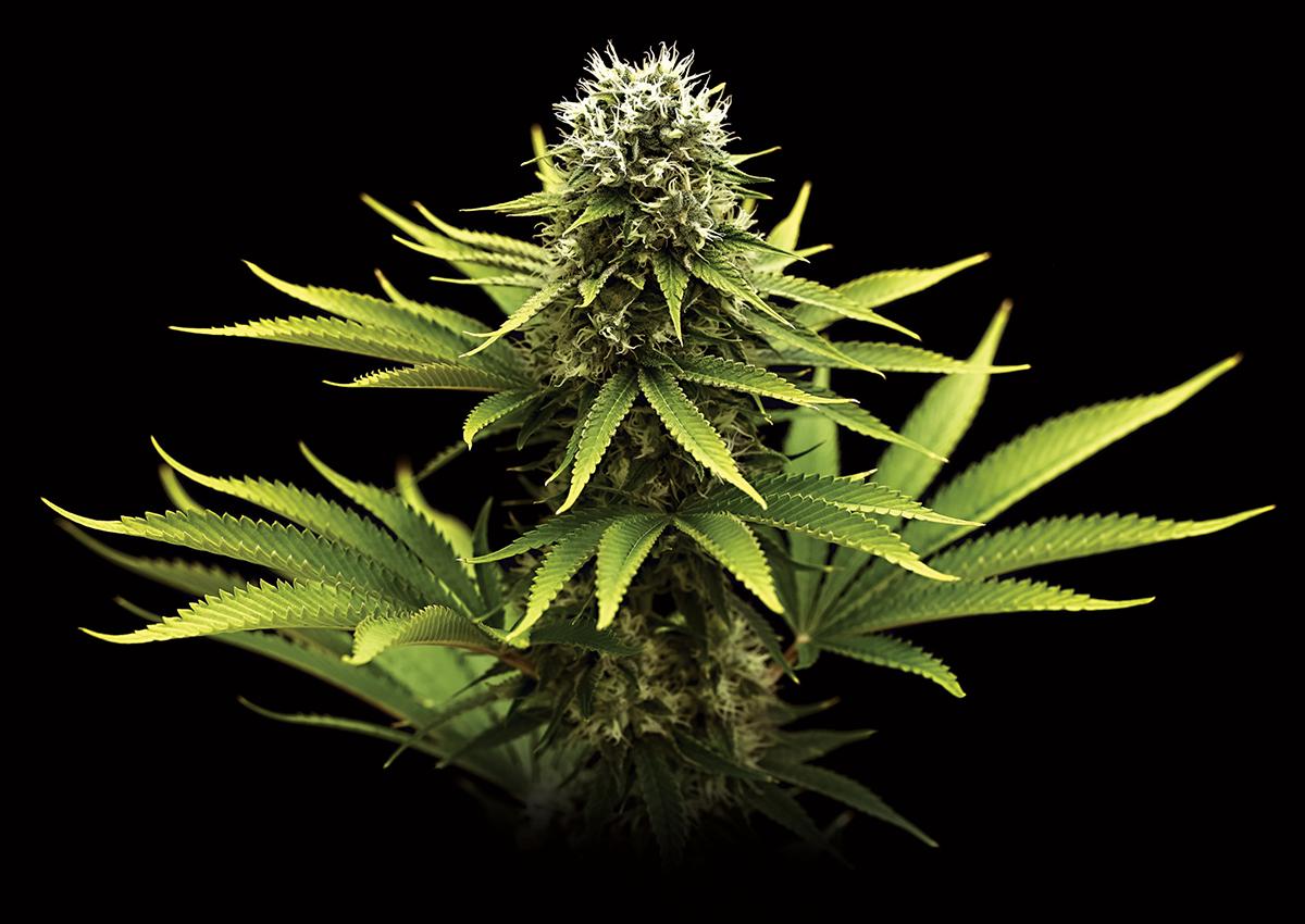 marijuana etiquette