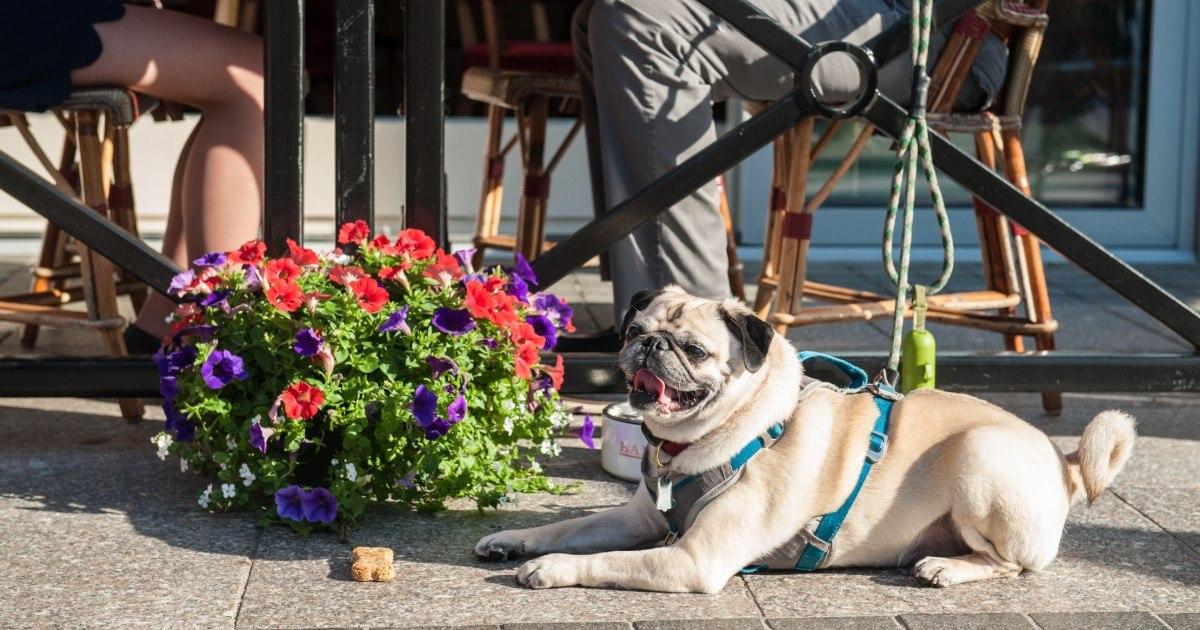 The 20 Best Dog-Friendly Restaurant Patios in Boston