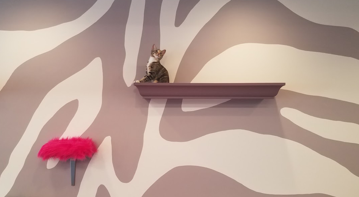 Amber is a new resident of Purr Cat Cafe, which is almost ready to open in Brighton