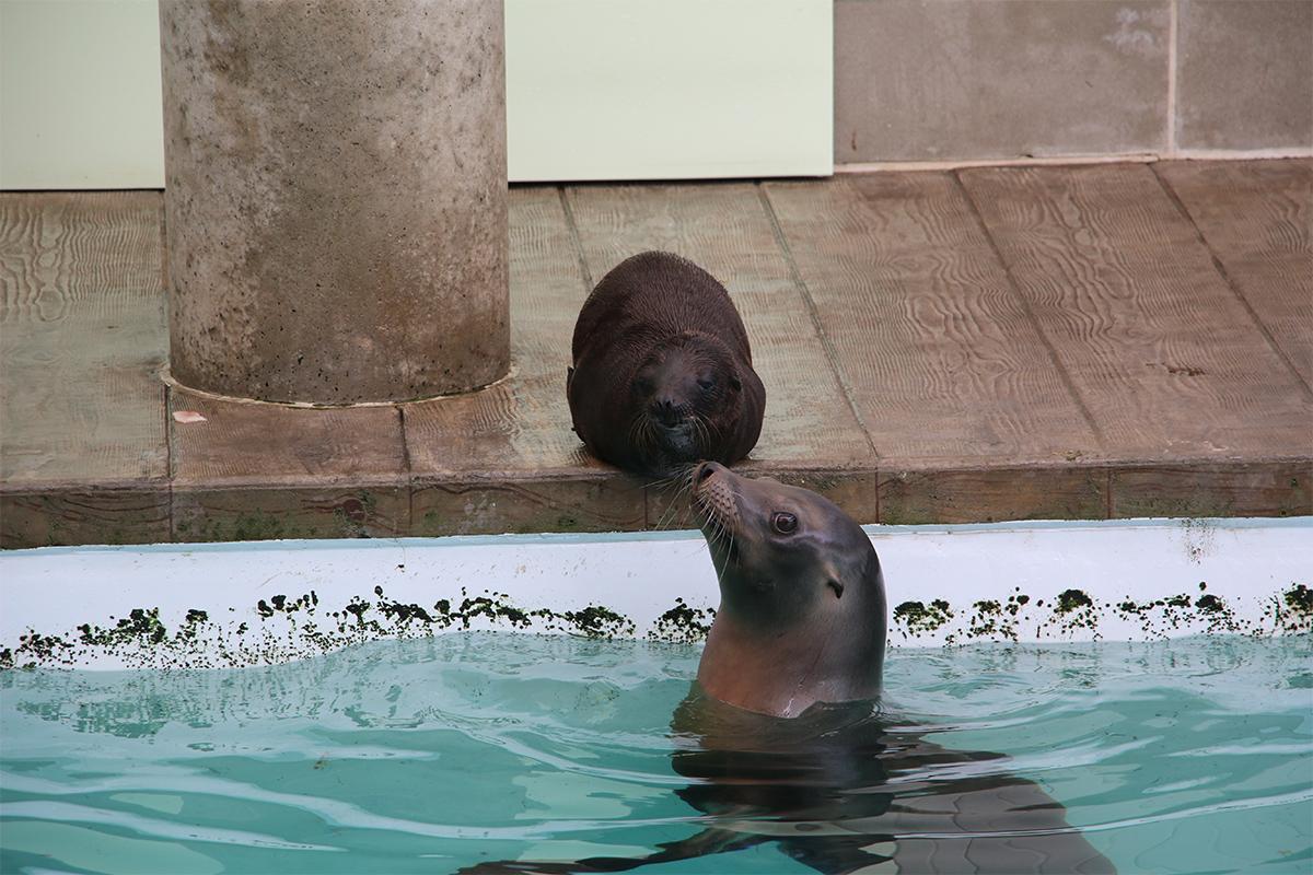 Ron Zoe sea lions