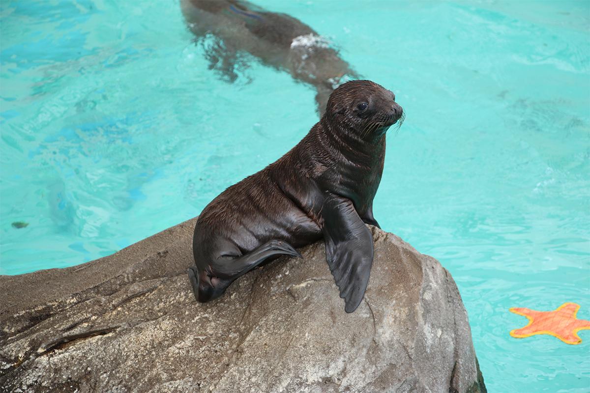 Ron sea lion