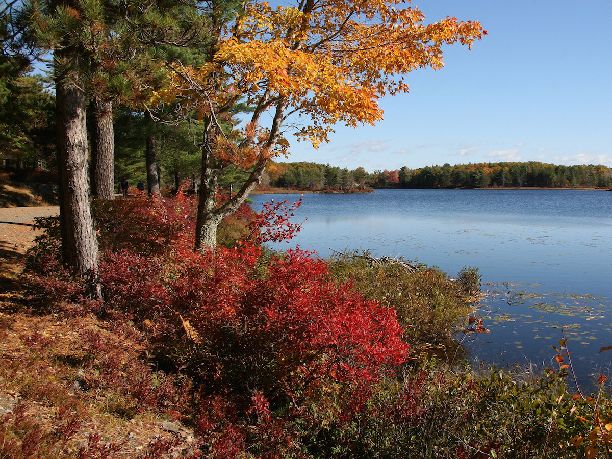 Fall leaves next to a body of water at Acadia National Park