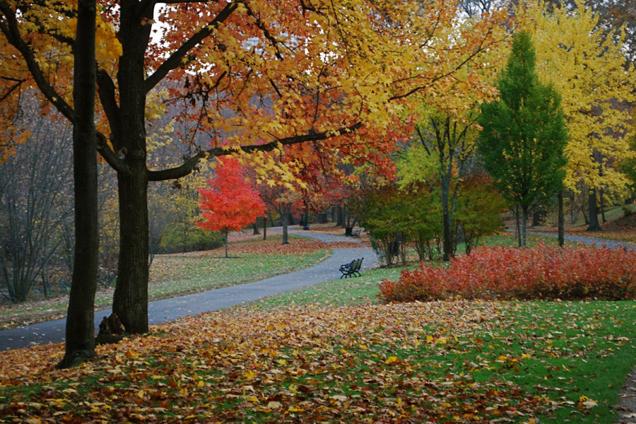 A street with fall foliage and a bench