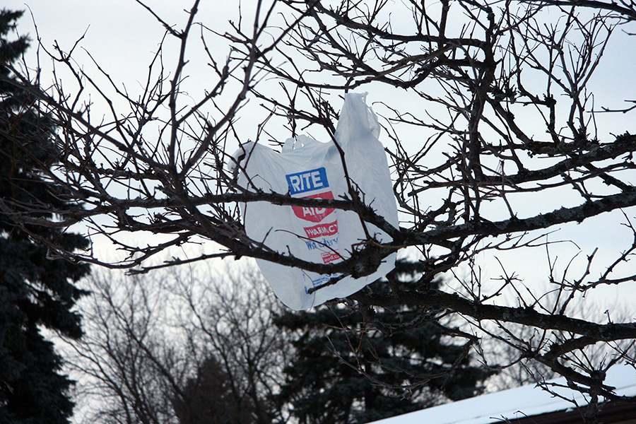 A plastic bag stuck in a tree