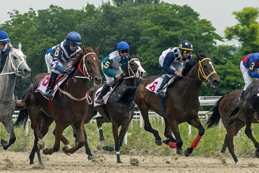 Race horses on the track