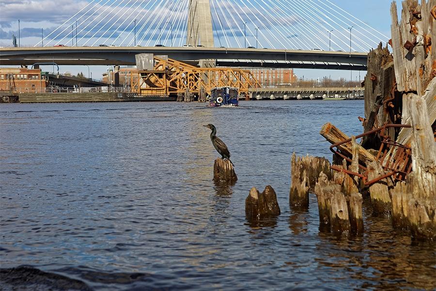 bird boston