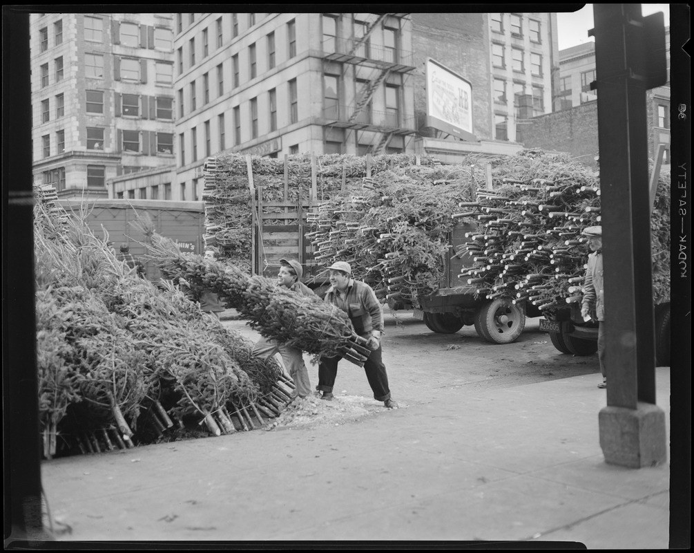 a man unloading christmas trees at quincy market