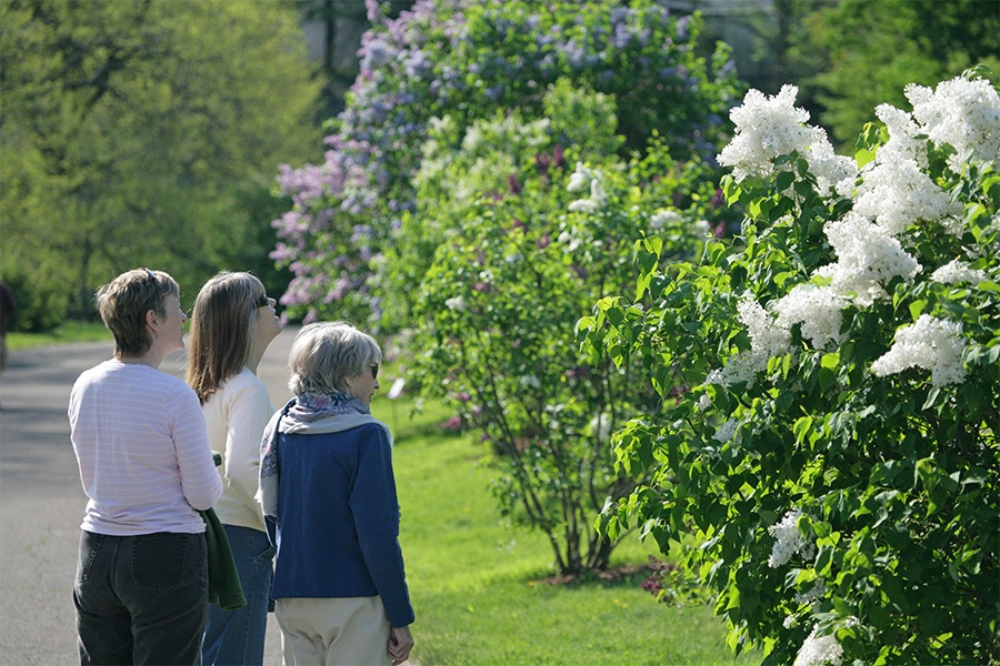 three people looking at the lilacs at lilac sunday 2017