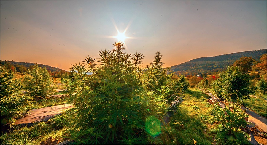 Luce Farm is hosting a hemp dinner at Deadhorse Hill in Worcester