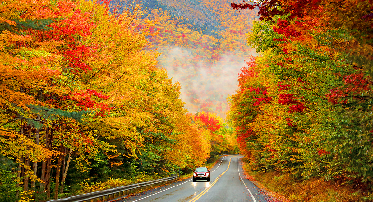 maine massachusetts fall foliage drives england guide timber harvesting objective forests outdoors