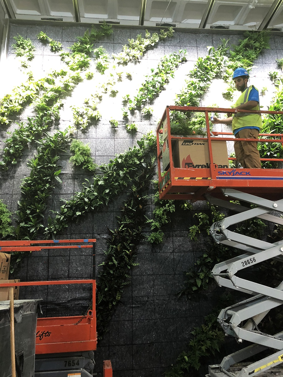 A living wall went up inside the Harvard Smith Center in June 2018