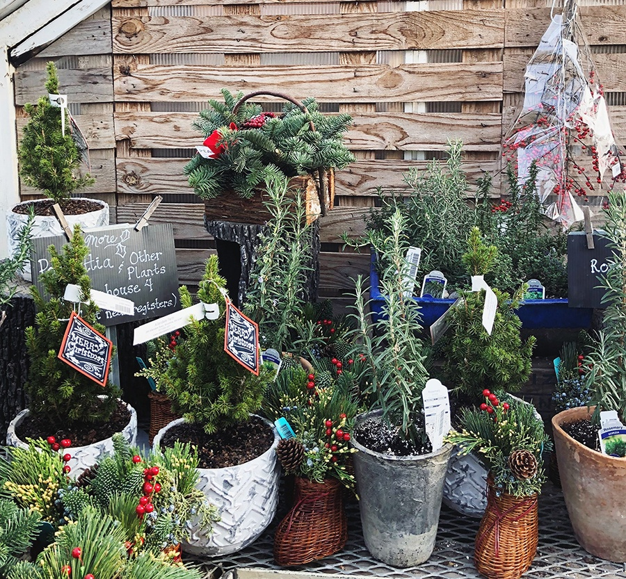 Buy Christmas Tree Seedlings: Where To Buy Or Cut Your Own Christmas Trees In Boston