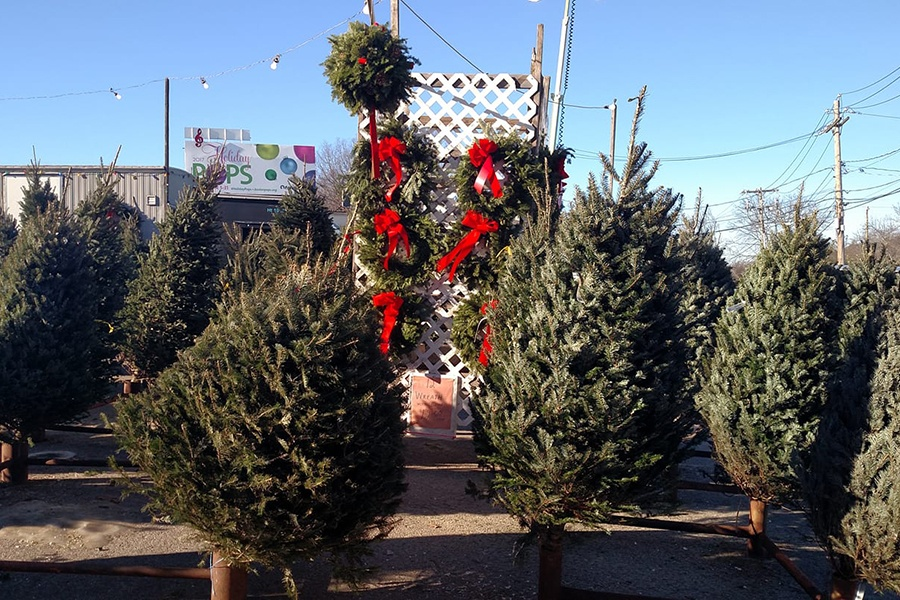Where To Buy Or Cut Your Own Christmas Trees In Boston