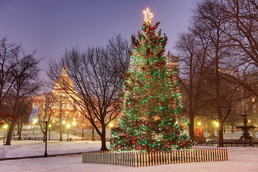 Why Does Boston Still Accept A Christmas Tree From Nova