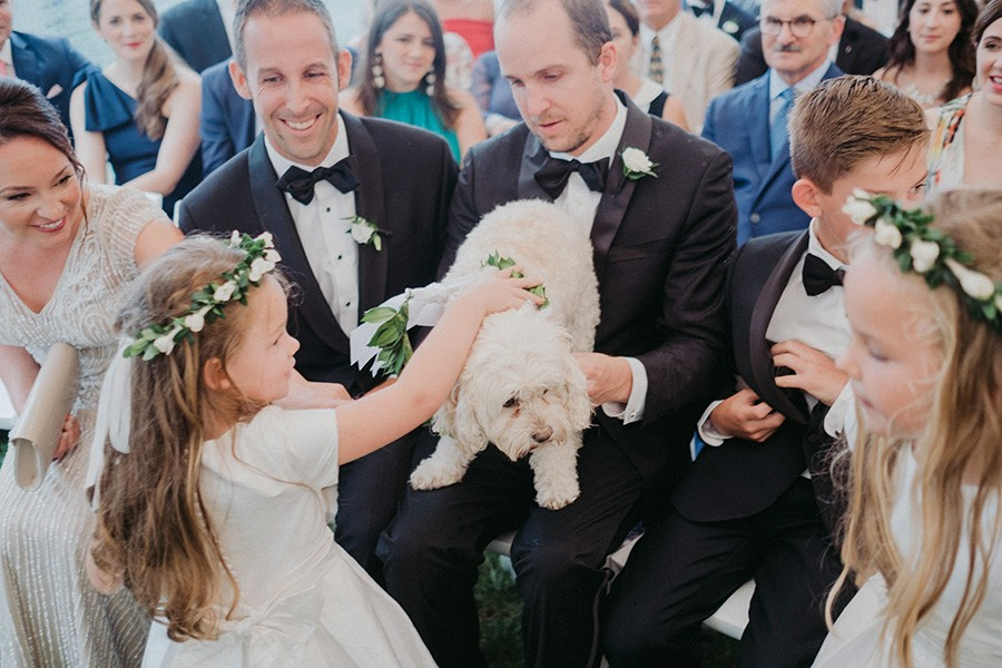 cockapoo at Provincetown wedding