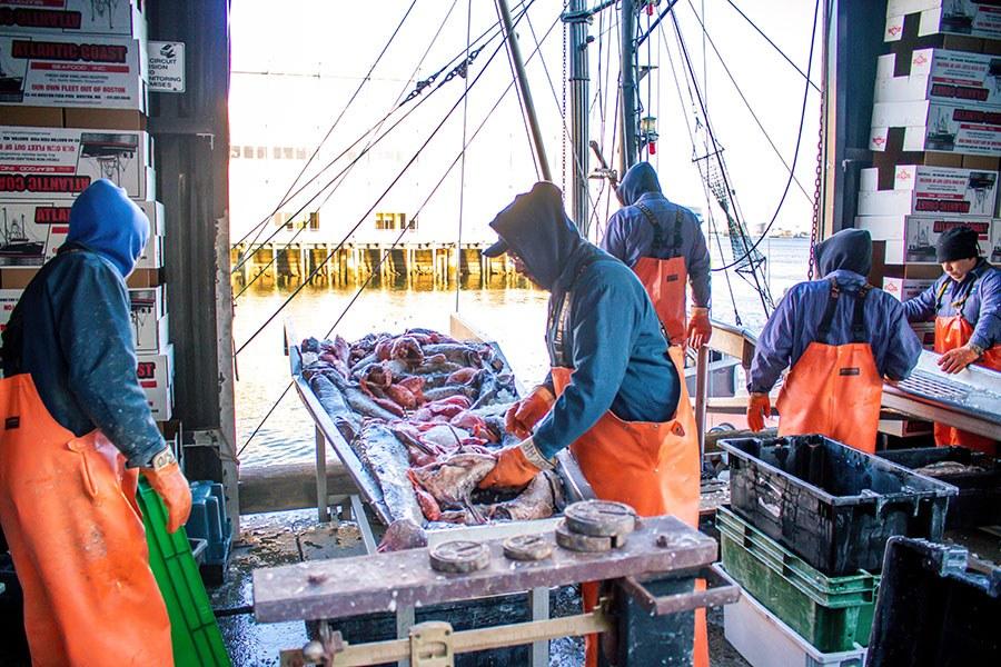 Fishmongers bringing in fresh catch for La Pescheria