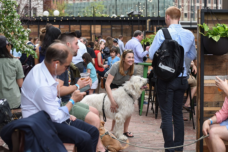 Gather your friends to pet adoptable dogs at the Patios this summer
