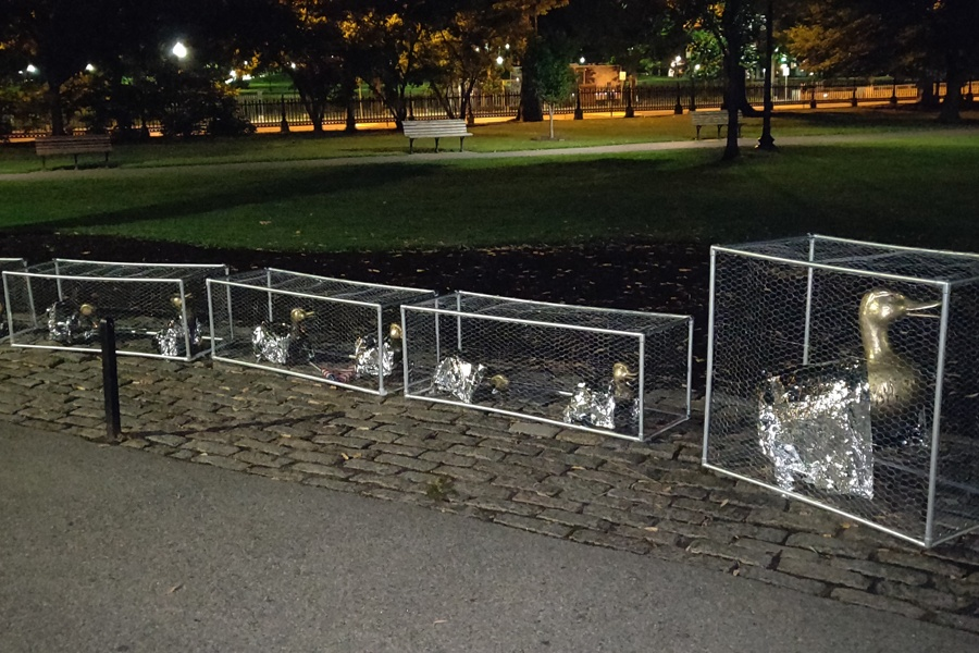 ducklings cages