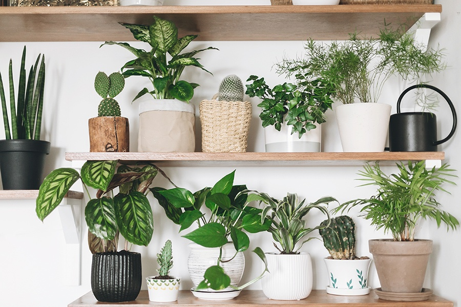 The Best House Plants to Boost Your Mood This Winter