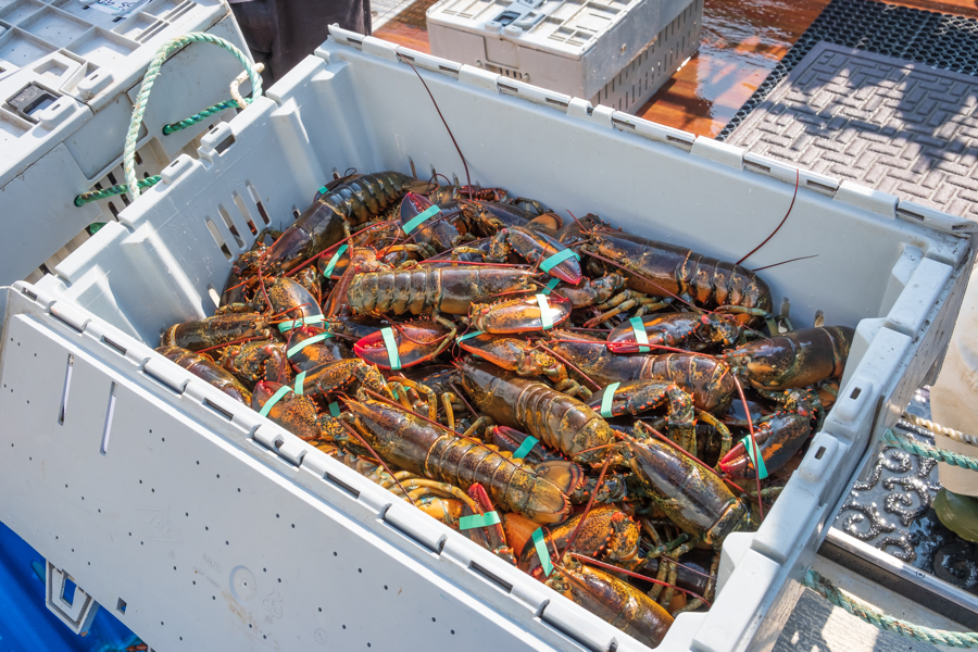 lobster crate
