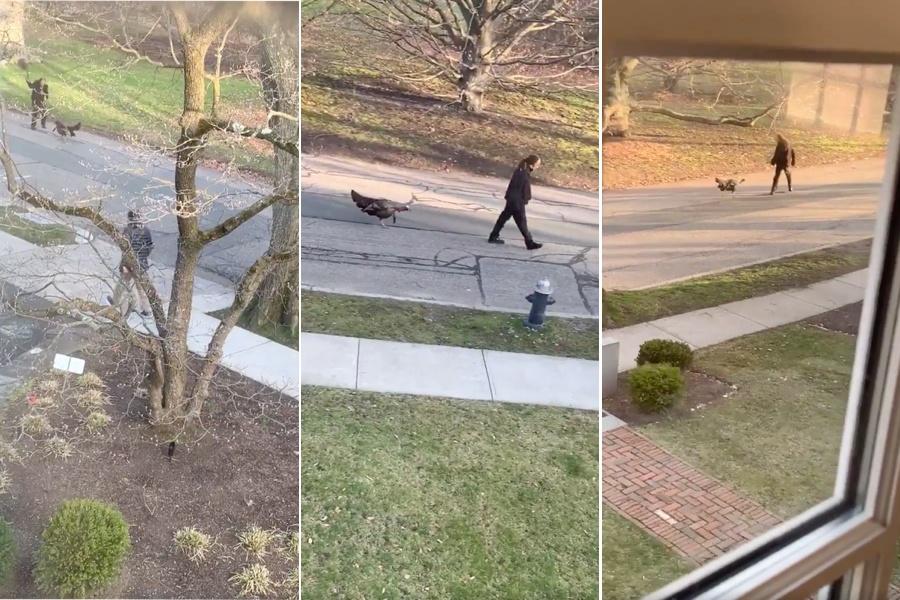 turkey video quarantine