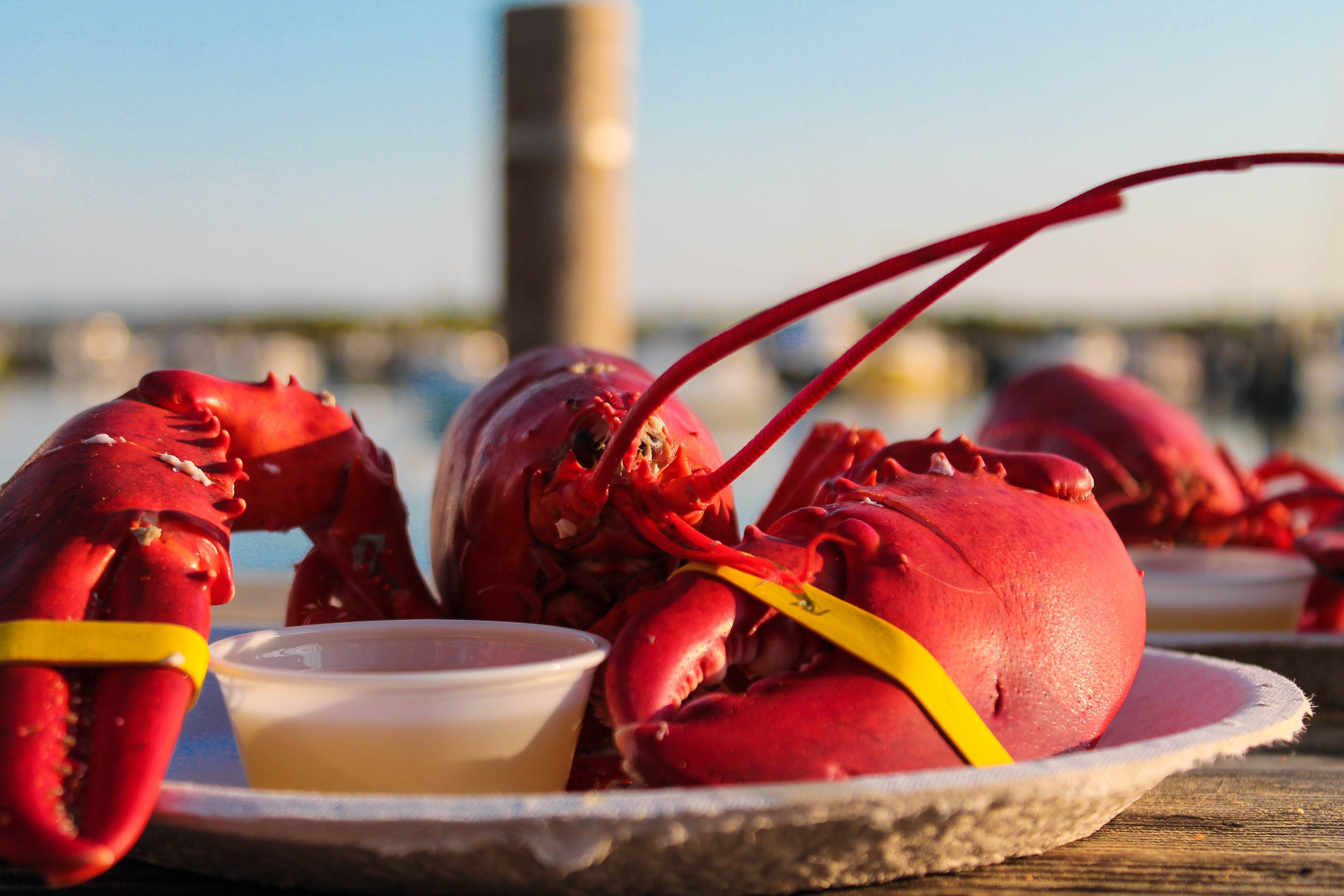 Larsen's lobsters