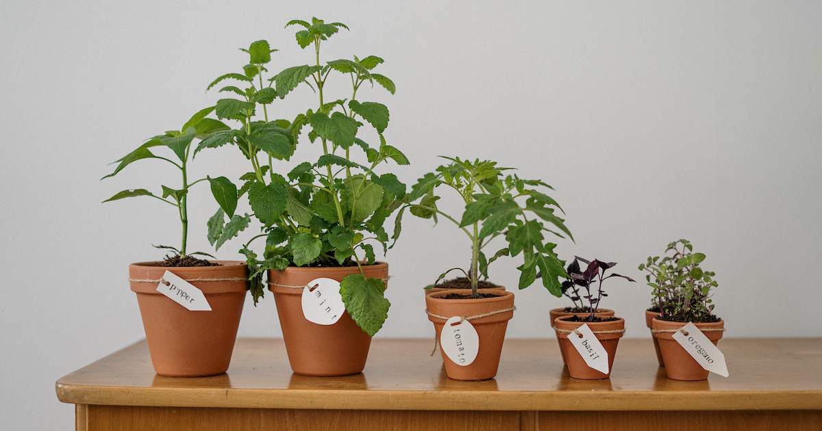 Seven Edible Plants You Can Grow In Your Apartment