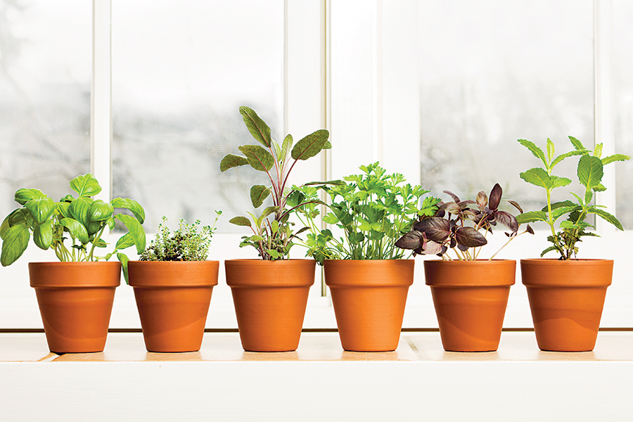 windowsill garden - 57 Issues To Do in and Round Boston This Winter