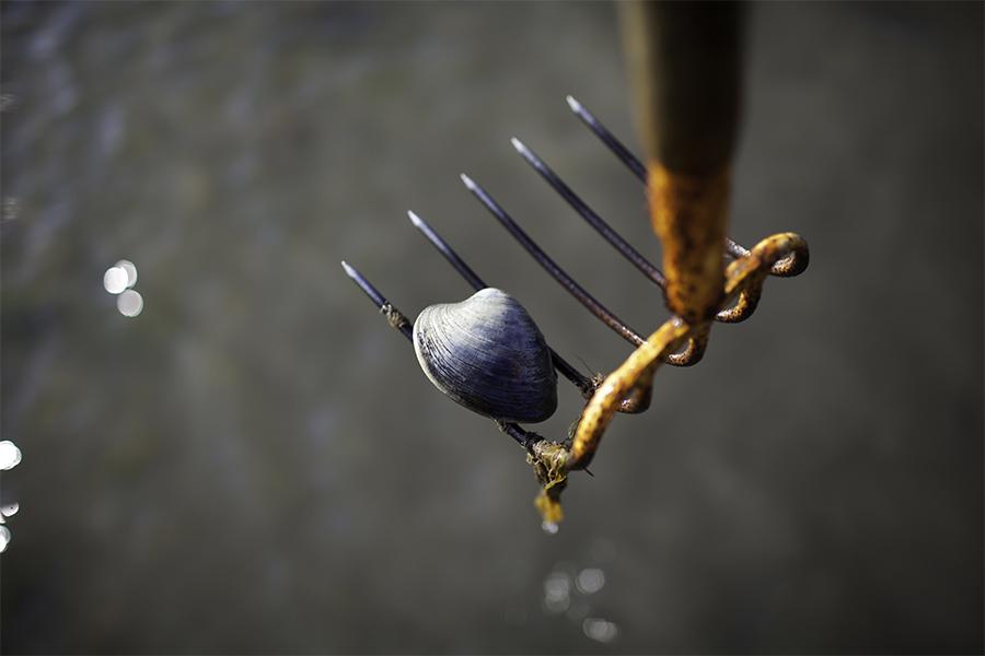 clamming rake