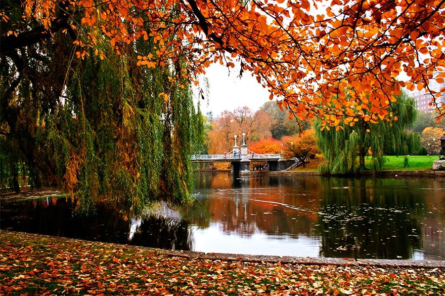 boston public garden fall