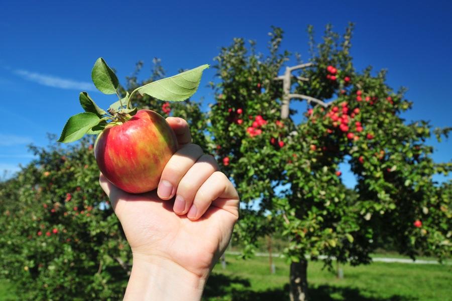 apple crime